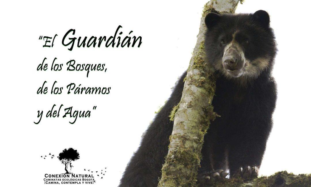 oso andino oso de anteojos