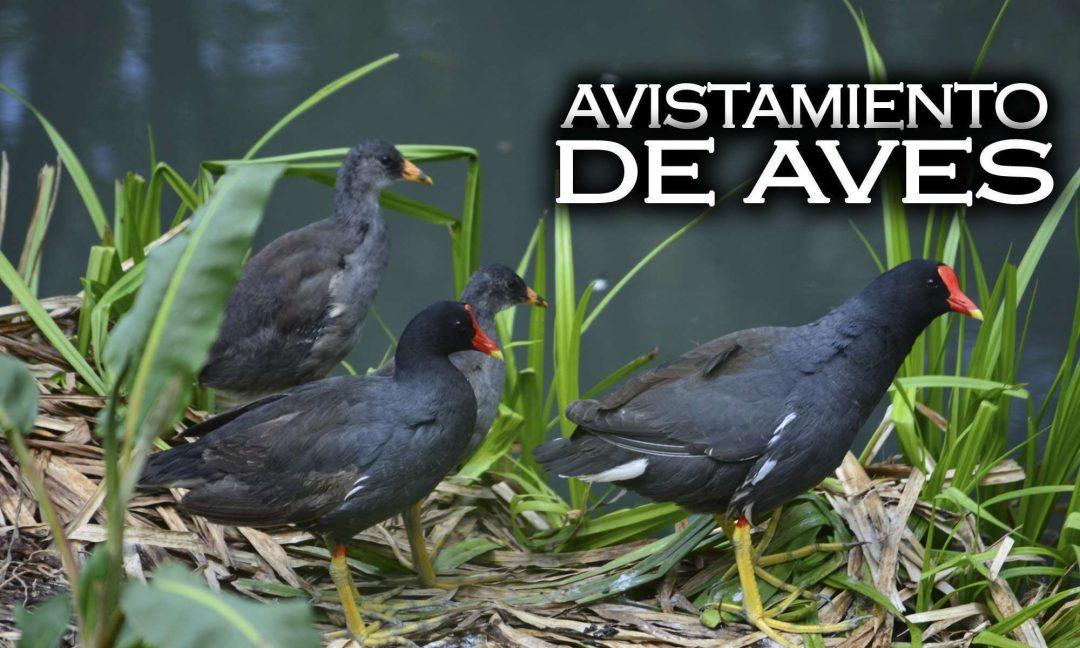 Avistamiento de aves en bogota cundinamarca