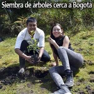 Siembra de Arboles cerca a Bogota
