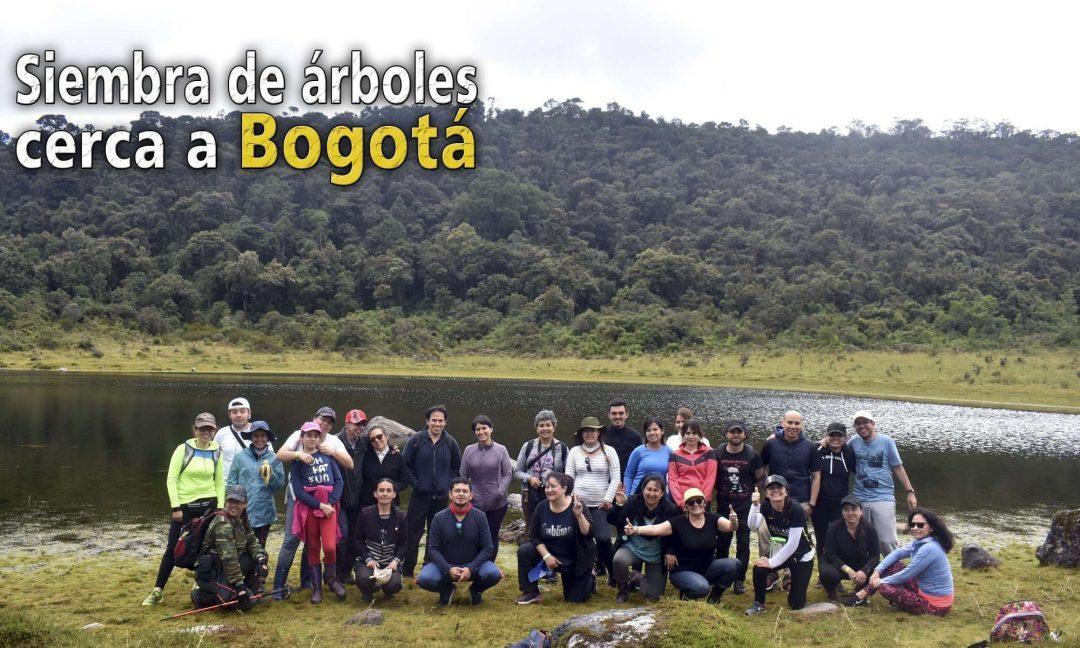 Siembra de arboles en Bogota