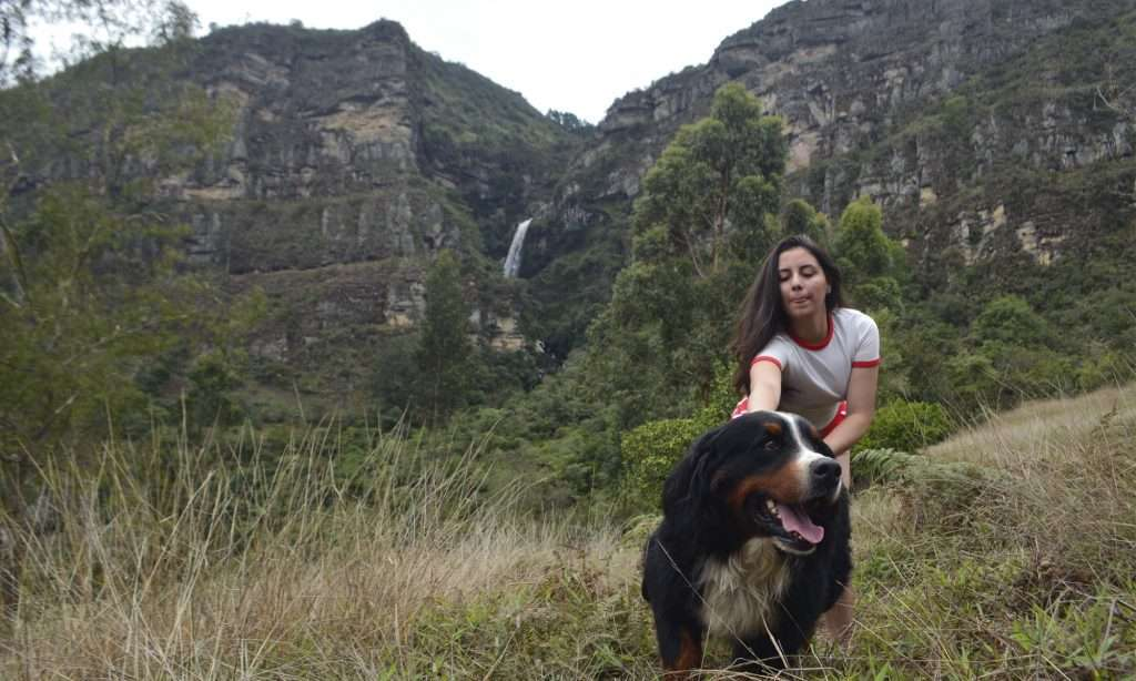 Planes con perros bogota Caminata canina Caminatas ecológicas con perros Senderismo con perros