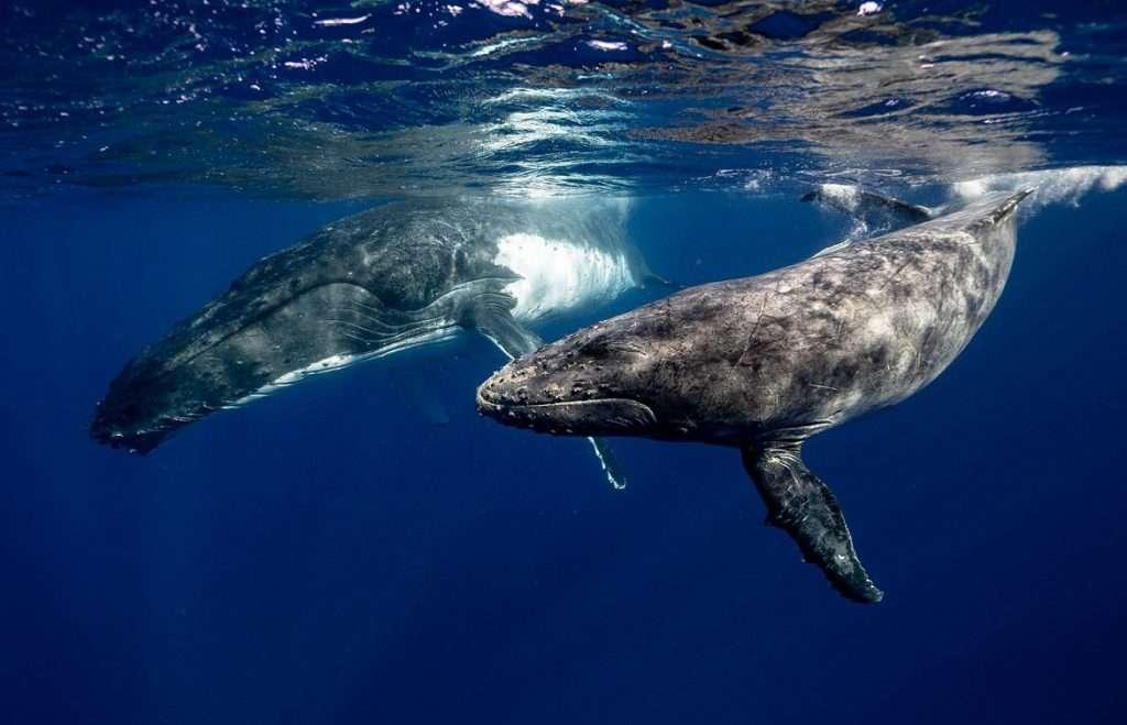ver ballenas colombia