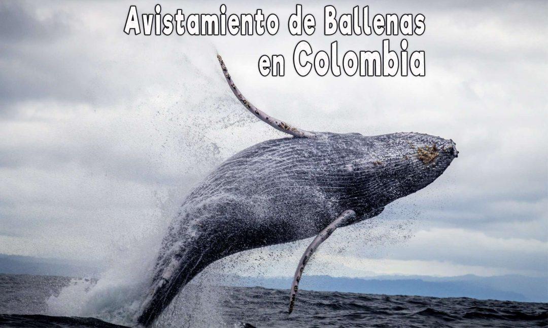 lugares para ver ballenas colombia avistamiento de ballenas colombia