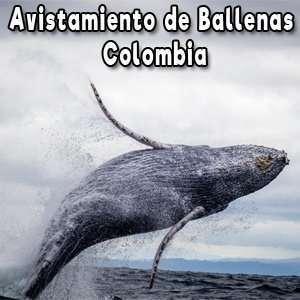9 Lugares para ver Ballenas Jorobadas o Yobartas en Colombia