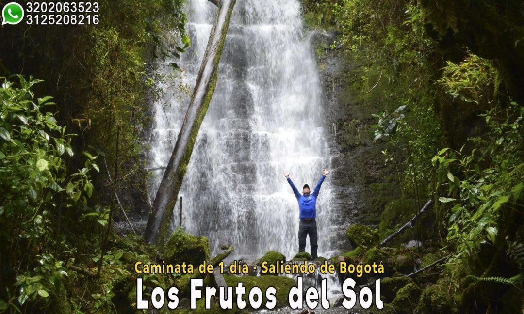 Cascada-del-arbol-cascada-cerca-bogota-cundinamarca